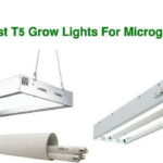 What Are The Best t5 Grow Lights for Microgreens