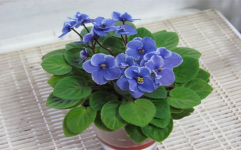 Best Grow Lights For African Violets